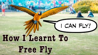 Download Parrot Free Flight Journey || Mikey The Macaw Video