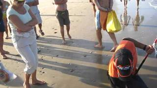 Download RAUL MARIO PESCA DORADA ORATA SURF FISHING PECHE DORADE TEAM AWA-SHIMA Video