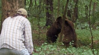 Download The Bears' Erratic Behavior May Put Jeff in Danger | Project Grizzly Video