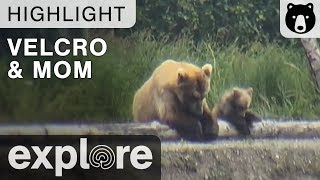 Download Velcro and Mom - Just The Two Of Us - Katmai National Park - Live Cam Highlights Video