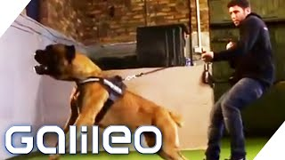 Download Die besten Wachhunde der Welt | Galileo | ProSieben Video