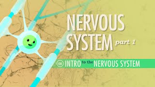 Download The Nervous System, Part 1: Crash Course A&P #8 Video