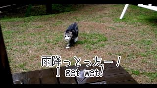 Download 雨とまる- Maru of the rainy day.- Video
