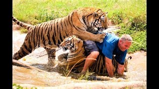 Download World's Most Ferocious Cats! Video