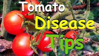 Download Tomato Disease Tips & Why You Shouldn't Worry Video