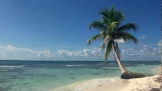 Download Relaxing 3 Hour Video of A Tropical Beach with Blue Sky White Sand and Palm Tree Video