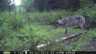 Download Four Months in the Life of a Remote Wildlife Camera Video