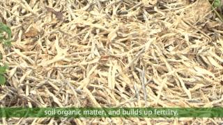 Download Scaling Up Conservation Agriculture in Zambia Video
