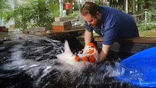 Download $60,000 Japanese Koi Fish Video