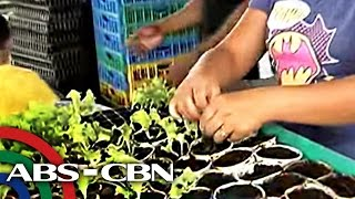 Download How to grow vegetables with only water Video