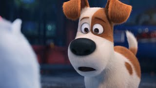 Download The Secret Life of Pets - Gidget | Best Memorable Funny Moments| Cartoons for kids Video