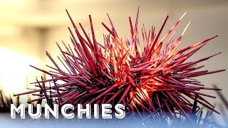 Download Sea Urchins Are California Gold: Hunter Gatherer Video