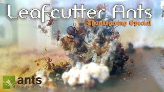 Download OMG! Leafcutter Ants WILL BLOW YOUR MIND | Thanksgiving Special - Part 1 Video