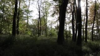 Download The Lavenham Walk - beautiful autumnal walk along disused railway in rural Suffolk Video