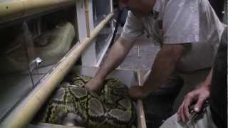 Download 13 Hour Delivery at Prehistoric Pets Video
