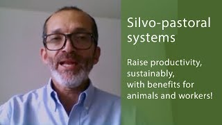 Download Promoting Silvo-pastoral Systems with the Global Agenda - Interview with Julián Chará Video