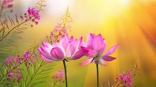 Download Peaceful Music, Relaxing Music, Instrumental Music, ″A Pathway to Peace″ by Tim Janis Video