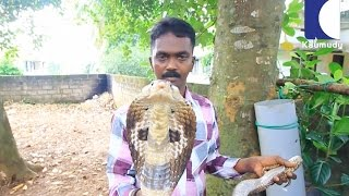 Download This is Where Vava Suresh Keep his Cobras | SNAKE MASTER EP 174 04-08-2016 Video