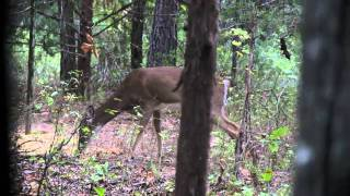Download Crossbow Deer Hunt with Incredible Slow Motion Shot Video