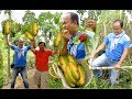 Download Pick Fruits at Samlot District Battambang Province | Natural Family Fruits Plantation in Cambodia Video