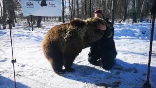 Download Медведь встречает пилота из Сортавалы (Карелия) Video