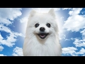 Download Gabe The Dog Tribute Video
