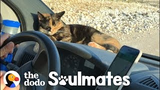 Download Stray Kitten Won't Let Traveling Couple Leave Her Behind | The Dodo Soulmates Video