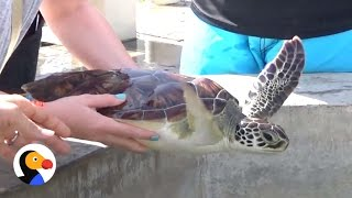 Download Popular Turtle Farm Is a Nightmare for Animals | The Dodo Video