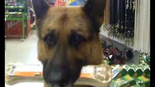 Download Dog-shopping Video