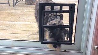 Download Doggy Door Difficulties Video