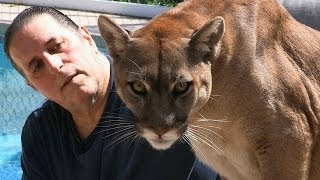 Download Cougar Man: Living With A Mountain Lion Video