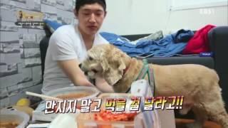 Download 세상에 나쁜 개는 없다 - 세상이 두려운 강아지 콜라 #001 Video