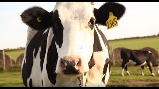 Download Where Does Milk Come From? Video