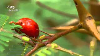 Download Docuprime 생명 40억년의 비밀 1부 - 소리없는 지배 식물 #002 Video