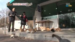 Download SBS [동물농장] - 휴게소를 포위한 고양이떼 Video