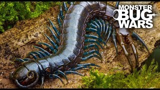 Download Best Centipede Showdowns | MONSTER BUG WARS Video