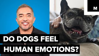 Download Cesar Millan explains doggy emotions Video