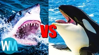 Download Top 10 SAVAGE Animal Rivalries Video