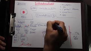Download Pediatrics Haematology - Volume I (Introduction & IDA) - Islam Raky Video