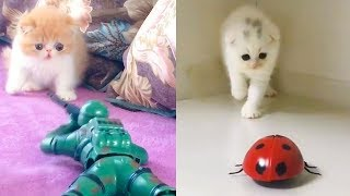 Download Cat Reaction to Playing Toy - Funny Cat Toy Reaction Compilation Video