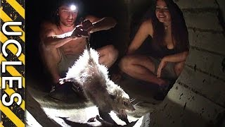 Download MYSTERIOUS creature caught in Mexico sewer - The Opossum Video