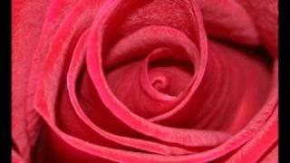 Download De-Phazz - Roses Video