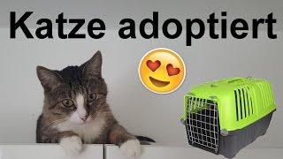 Download Katze aus Tierheim adoptiert! Einzug + Vergesellschaftung Video