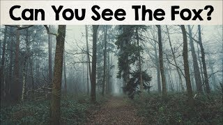 Download Nobody Can See All The Hidden Animals । Optical Illusions । Brain Teasers [#2] Video