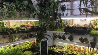 Download JANUARY HIGHLAND GREENHOUSE TOUR: ORCHIDS, CARNIVOROUS PLANTS, HOYA AND MORE1080p Video