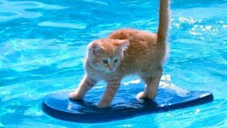 Download 1% CHANCE that these animals WON'T MAKE YOU LAUGH! - Funny ANIMALS IN POOLS videos Video