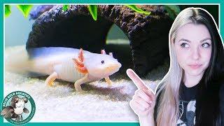Download Feeding My Axolotls! // VLOGMAS DAY 3 Video