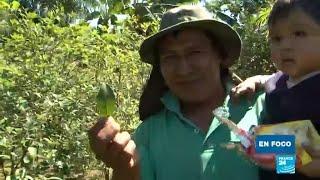 Download El Chapare, zona cocalera de Bolivia y bastión político de Evo Morales Video