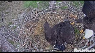 Download SWFL Eagles ~ Flopping Fish Startles E9; Watch Your Toes Dad! 2.23.17 Video