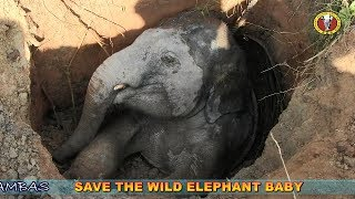 Download RESCUE BABY WILD ELEPHANT FROM WELL (Short) Video